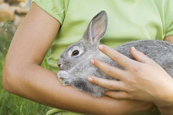 Sacrificarea iepurilor