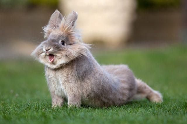 Rinita la iepuri: simptome, tratament și prevenire