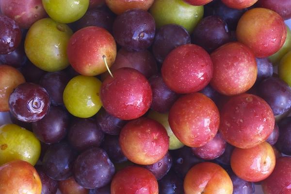 Alegeți cele mai bune soiuri de prune pentru creștere în funcție de caracteristici