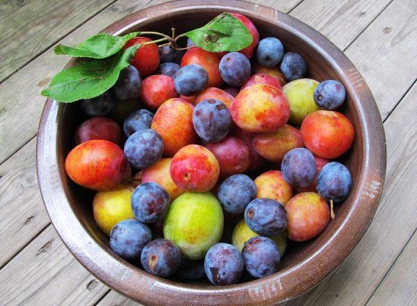 Principalele diferențe între prune și prune de cireșe, compoziția lor chimică, beneficiază și dăunează organismului