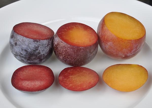Cele mai neobișnuite hibrizi de caise, piersici, prune și mere, descrierea, avantajele și dezavantajele acestora