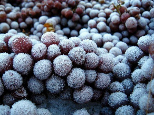 Pentru a face fructe de padure de vin gheata trebuie sa inghete