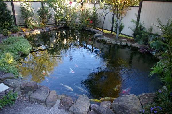 Iazul de pește