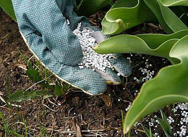 Îngrășăminte azotate pentru plante