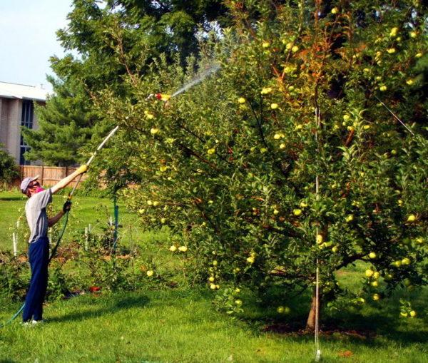 Condiții de prelucrare a pomilor fructiferi