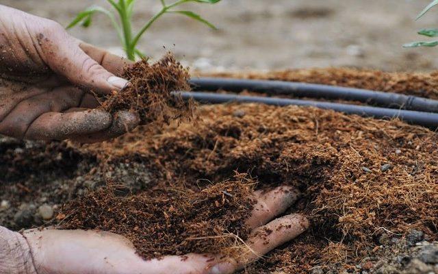 Îngrășăminte organice