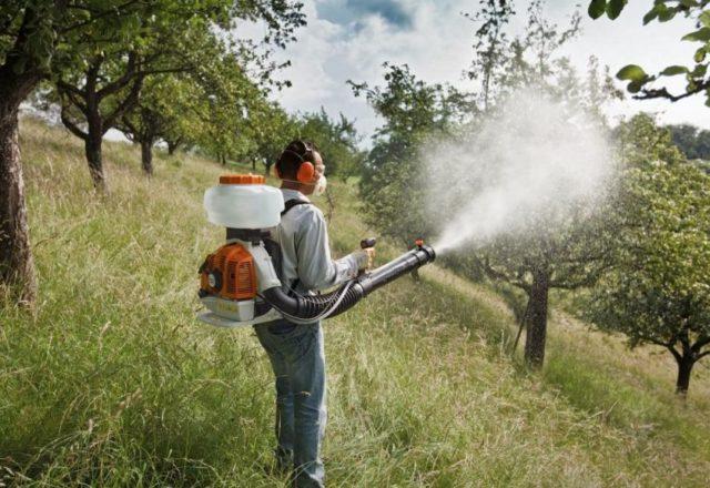 pulverizarea copacii de toamnă