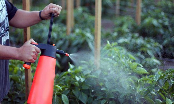 Folosirea pansamentelor din plante