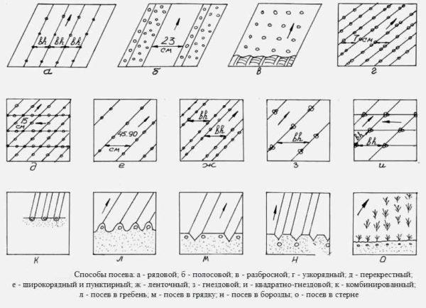Schema de plantare a morcovilor