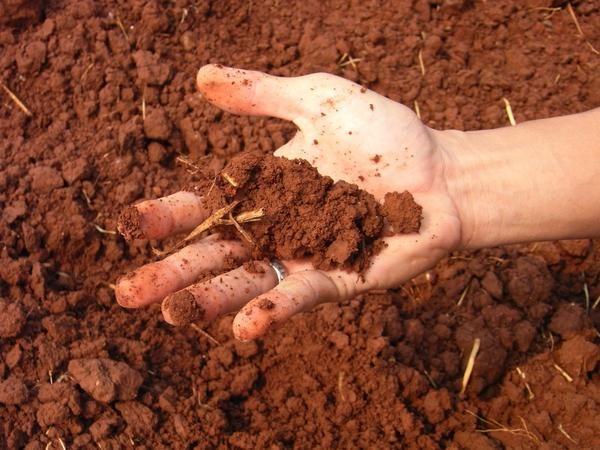 Dacă solul alcalin este udat cu oțet, reacția trebuie să meargă.