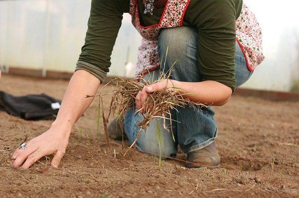 Castraveții iubesc solul neutru