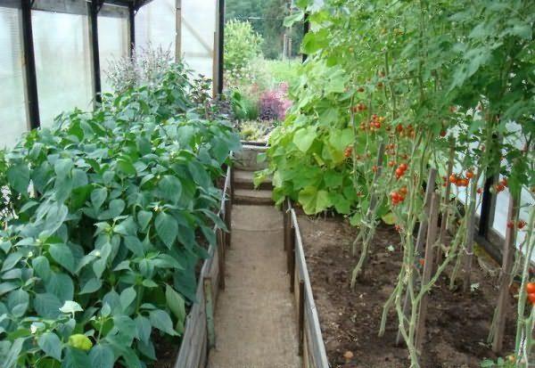 Tomate și ardei