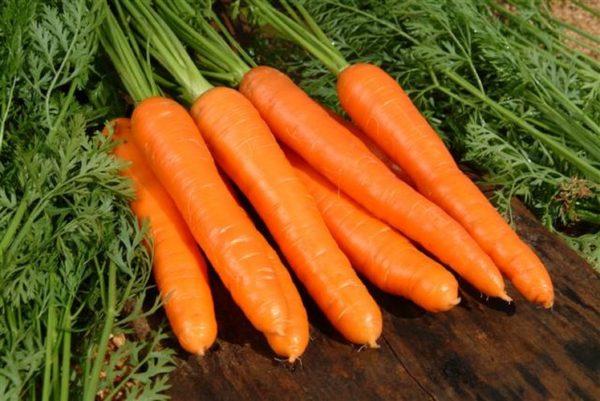 recolta buna de morcovi
