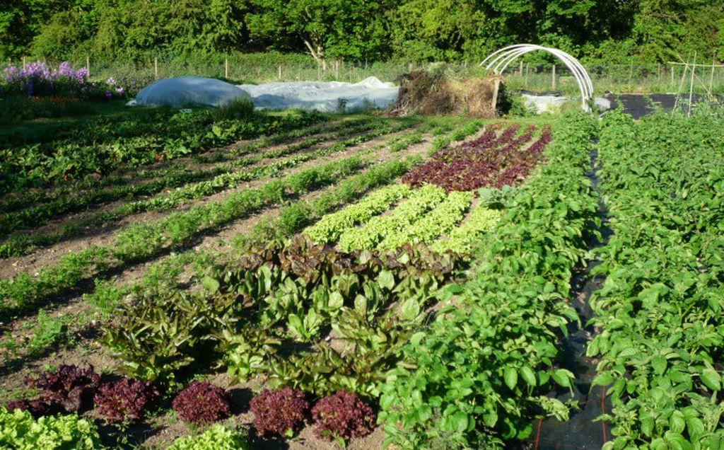Cartierul corect al culturilor